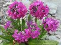 цветы Алтая 10