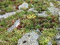 камни Алтая 2