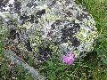 камни Алтая 3