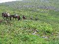Конные туристы