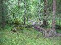 Кучерлинское ущелье. Тропа через лес