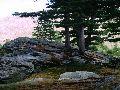 Мультинские озера. Межозерный перешеек. Кедры на валуне