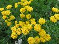 Цветы Алтая 1