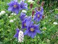 цветы Алтая 3
